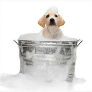 Pet Care - Health & Hygiene