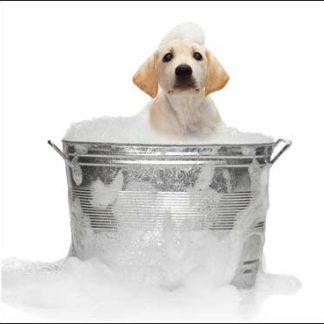 Pet Care - Health, Hygiene & Supplements