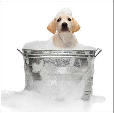 Pet Care - Health & Hygiene