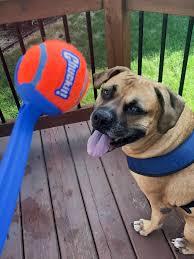 Fetch Toys & Balls