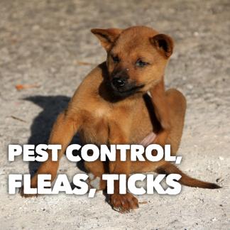 Pest Control, Flea, Ticks, Mites, Worms