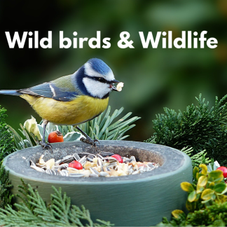 Wild Birds & Wildlife