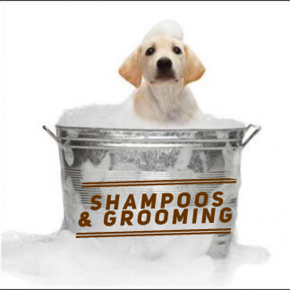 Shampoos and Grooming